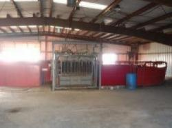 Image of ...Cattle Barn