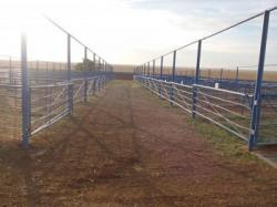 Image of ...Cattle Pens